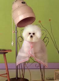 Dog Grooming 01