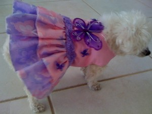 Peanut - Cheryl Dyck's dog
