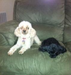 Chloe and FooFoo