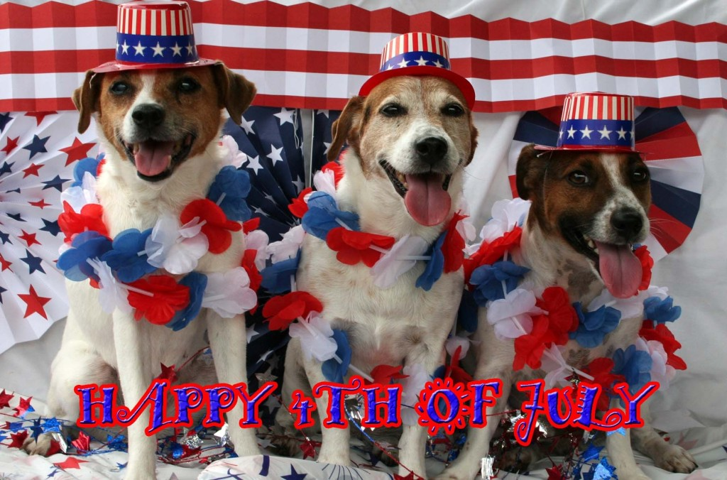 4th of July Kat's Dogs