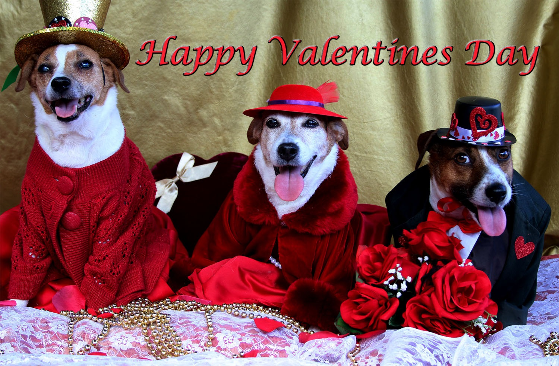 Resultado de imagen para happy valentin day dogs