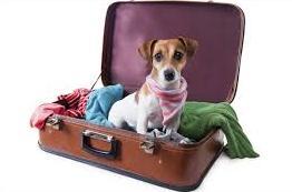 Vacation Dog 04