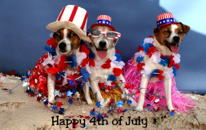 4th of July Kat's Dogs 2015