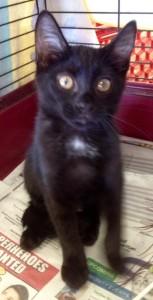 Black Kitty 07-07-15