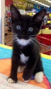 Black Kitty 07-08-15