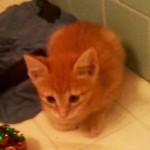 Orange Kitty 02