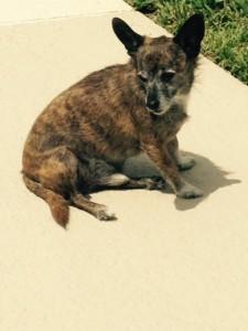 Frankie now Fuzzy