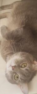 kitty-05