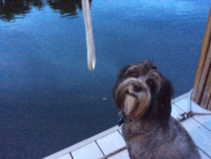 Teddy Loves Sitting on the Dock
